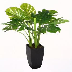 fausse plante interieur